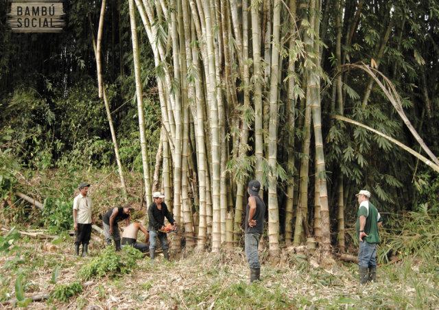 Bambu Social